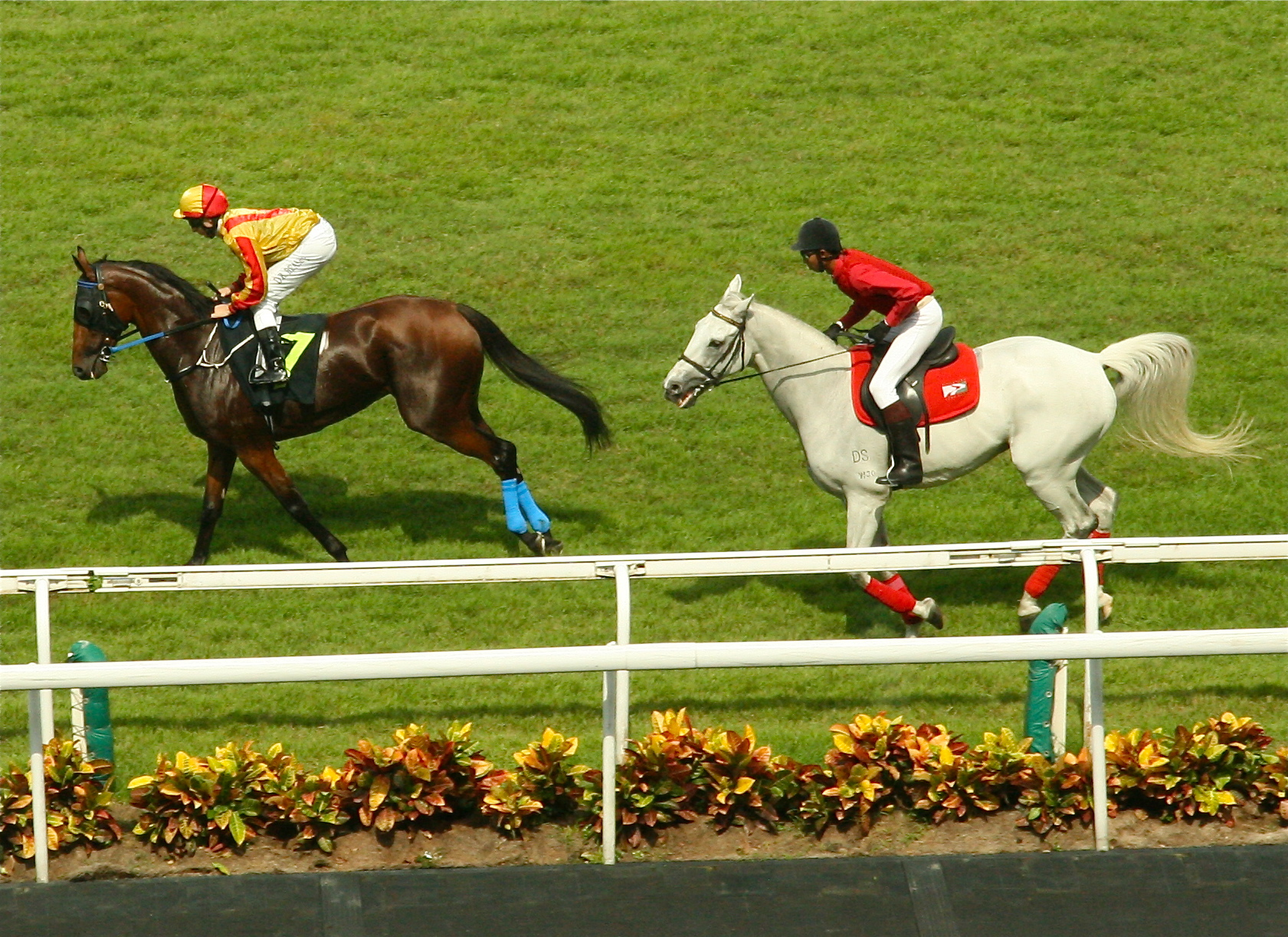 Fine Day of Horse Racing at the Singapore Turf Club