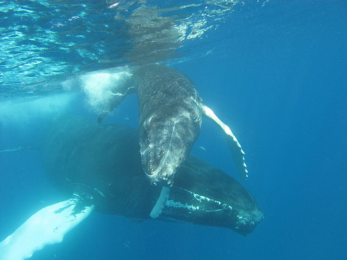 Whale watching in the Caribbean