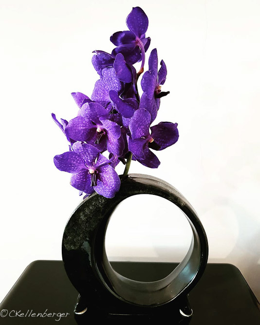 Purple Vanda Mikasa Orchids