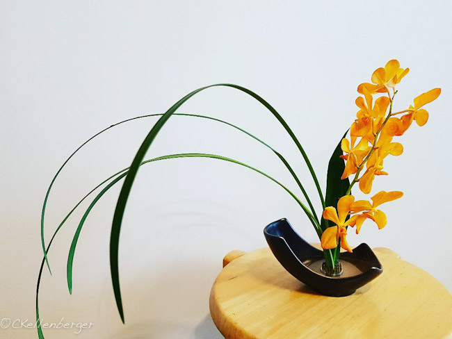 An ikebana arrangement made by floral artist Carrie Kellenberger using golden mokara orchids and blades of grass