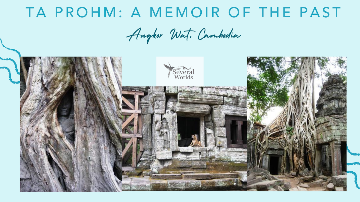 Ta Prohm, Angkor Wat, Siem Reap, Cambodia