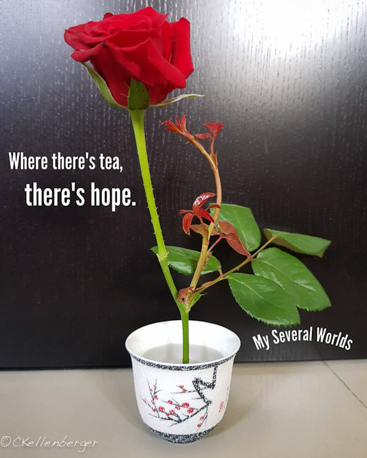 Teacup and Red Rose